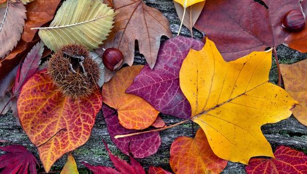 Afbeeldingsresultaat voor herfst